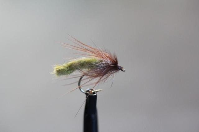 Caddis Pupa Ext.