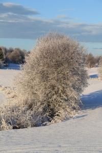 Vinter på farmen 004