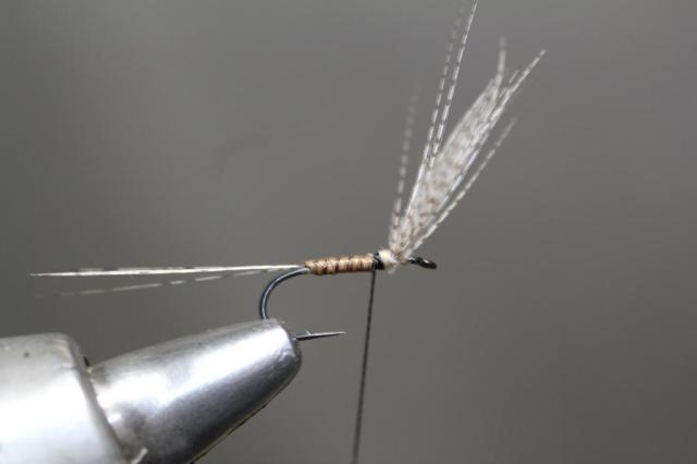 Body Wing 1
